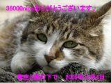 36000_091204.jpg