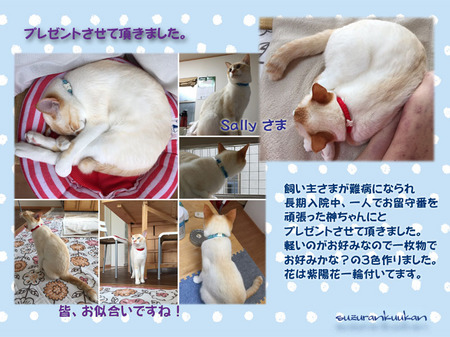201700628_1nyan_hanakubiwa.jpg