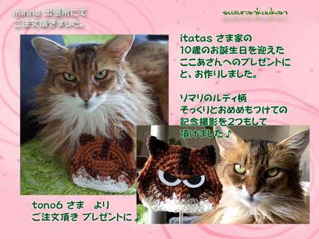 20180404_1nyan_nekokosuta.jpg