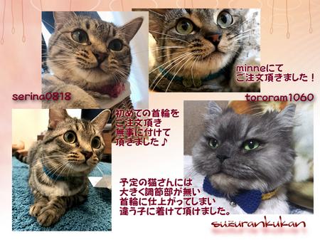 20180905_houkokugazou_2nyan.jpg