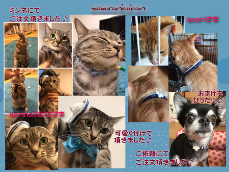 20190725_houkokugazou_1wan_2nyan.jpg