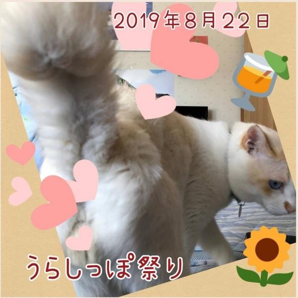 Collage 2019-08-02 19_25_47.jpg